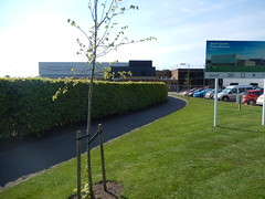 St Andrews sports centre, 2016 May 12 (Dunnock_D) Tags: road street uk blue sky white tree green grass clouds scotland unitedkingdom fife britain pavement hedge standrews carpark buidling sportscentre