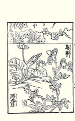 Bottom  water-lily and monkshood (Japanese Flower and Bird Art) Tags: flower japan japanese book waterlily picture anonymous ranunculaceae woodblock monkshood ukiyo japonicum nymphaeaceae aconitum nuphar chinense readercollection