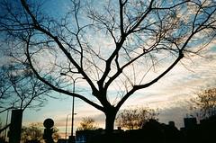 *** (Boris Rozenberg) Tags: city blue sunset sky urban sun tree film nature beautiful silhouette clouds composition analog 35mm photography evening kodak analogue filmcamera analogphotography compactcamera kodakfilm harmonie filmphotography kodakcolor filmcommunity