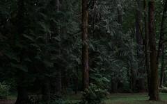 temperate rainforest (Alvin Harp) Tags: trees nature forest washington rainforest sony may pacificnorthwest 2016 temperaterainforest naturesbeauty teamsony sonya7rii alvinharp