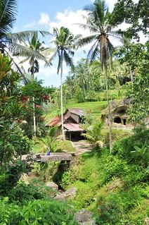 bali nord - indonesie 38