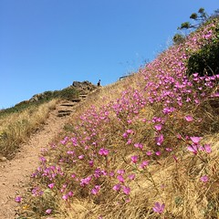 Tank Hill (tedd4u) Tags: sanfrancisco california park flowers blue boy sky brown square outside rocks day purple path steps rocky sunny trail poppy daytime municipal chert