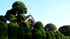 Temple in morning light (DameBoudicca) Tags: japan temple tokyo buddhism hedge  nippon  shiba  japon buddhisttemple giappone templo nihon tempel tokio bouddhisme tempio budismo japn seto tokugawa haie buddhismus hecke     buddhismo zjji siepe hck     buddhisttempel jdosh templosbudistas sanenzanzjji templesbouddhistes  yyoshs