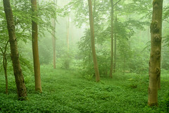 Summer Greens (Stu Meech) Tags: mist green fog woods nikon stu broadway foggy cotswolds lee d750 filters tamron worcester meech polariser 2875
