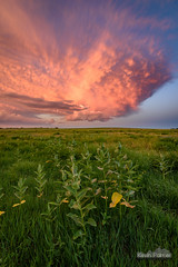 Milkweed Supercell (kevin-palmer) Tags: storm stormy thunderstorm june summer sky weather clouds nikond750 tokina1628mmf28 blue norfolk nebraska greatplains evening dusk sunset colorful orange pink prairie wildflowers milkweed dying lpsupercell base green grass