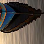 "Sombra e reflexo por Drix Brites <a style=""margin-left:10px; font-size:0.8em;"" href=""http://www.flickr.com/photos/17570773@N08/6795651640/"" target=""_blank"">@flickr</a>"
