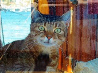 Boat kitty