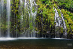 Wonderwall - Mossbrae Falls, Dunsmuir, California (david.richter) Tags: california longexposure blue usa mist fern green nature wet water grass northerncalifornia yellow creek canon landscape flow photography eos rebel waterfall moss rocks raw i5 outdoor unitedstatesofamerica smooth hike falls norcal lush sacramentoriver xsi dunsmuir mossbraefalls singleexposure ishootraw nohdr davidrichter 450d rebelxsi waterfallwednesday tokina1116mmf28atx116prodx wwwdavidrichterphotographycom
