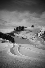 into the snow and far away ((:Andrzej:)) Tags: people ski tree monochrome landscape path walk slope alpedisiusi