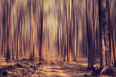 Forest dream! (VinothChandar) Tags: trees abstract blur tree nature beauty lines mystery forest canon landscape photography photo path dream surreal tall leading kabini abigfave