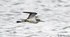 Record Shot (Bird with leg flag) IMG_4416xw