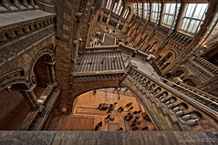 Too much monkey business / Natural History Museum / London (zzapback) Tags: city uk england urban history museum de temple photography rotterdam nikon fotografie angle natural britain propaganda terracotta united capital great wide victorian sigma kingdom darwin evolution rob creation captain gb kensington botany romanesque ultra 1224mm nhm stad palaeontology engeland 2012 londen zoology entomology southkensington uwa voogd mineralogy groothoek alfredwaterhouse exhibitionroad hoofdstad koninkrijk verenigd d700 francisfowke cathedralofnature zzapbacknl robdevoogd enjoyyourdaystayawake