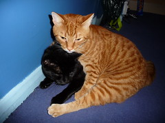 Munch keeping warm (Lolly4Holly) Tags: sleeping cats funny warm felix kittens munch cosy