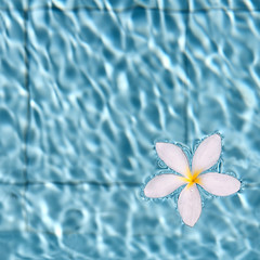 untitled . (helmet13) Tags: summer holiday flower water raw swimmingpool simplicity frangipani mauritius gettyimages aoi 100faves peaceaward heartaward world100f d300s