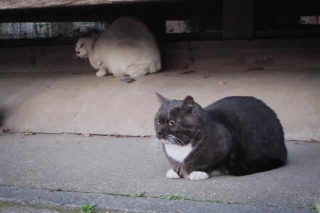 Today's Cat@2012-03-27
