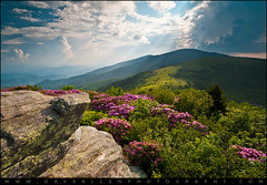 Roan Mountain from Appalachian Trail near Jane's Bald (Dave Allen Photography) Tags: flowers light summer mountain mountains nature beauty lines outdoors nc spring highlands flora nikon tn natural hiking northcarolina wideangle adventure trail rhododendron carolina rays blooms appalachian wilderness naturalbeauty leading blueridgemountains beams sunbeams blueridge roan daveallen lightrays crepuscular 1735mm wnc westernnorthcarolina roanmountain grassybald southernappalachians d700 platinumheartaward janesbald janebald mygearandmeplatinum mygearandmediamond