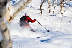 Through the trees (rolleh) Tags: travel snow japan hokkaido skiing powder niseko miharashi