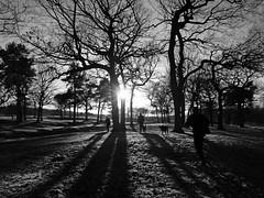 Dog Day Afternoon(explore) (kenny barker) Tags: trees winter bw monochrome lumix scotland shadows silhouettes boxer lowsun falkirk bonnybridge roughcastle panasonicgf1 kennybarker