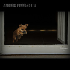 AMORES PERRUNOS II (TioTxus) Tags: barcelona birthday park street city trip travel family blue friends light red sea party vacation portrait sky people urban blackandwhite bw espaa music food dog baby sun white house mountain holiday black flower color macro green bird art love film beach nature water valencia girl fashion animals architecture night clouds fun photography photo google spain nikon europa europe perro mascota txus saltar d90 escapar godelleta oltusfotos tiotxus