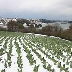 Paimpol Trieux sous la neige