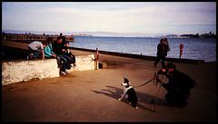 the poser (brownbeatle) Tags: family sea dog color film analog photo picture streetphotography streetscene scene lomolca colorfilm fujicolorsuperia200