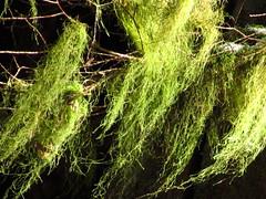 dreamy moss