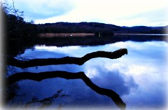 Loch of the Lowes (Twilight) (eric robb niven) Tags: canon scotland twilight perthshire loch dunkeld lowes g12