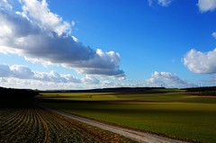 Une partie de campagne (nic( o )) Tags: road sky cloud france field clouds landscape sony horizon champs meadow culture route ciel cumulus fields prairie nuage nuages paysage grassland campaign plain campagne francia dri champ herbe picardie lowland plaine lande somme picardy pturage nex5n