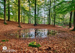 The Forest (Chris Renk) Tags: nature forest leaf outdoor wald spiegelung flensburg norddeutschland northerngermany blatter