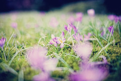 A touch of spring I (c.r.photoholic) Tags: green germany deutschland 50mm colorful foto bokeh mark 14 hamburg u1 grn creamy blende barmbek alterteichweg farbspiel sigma5014 5dmarkii kremig