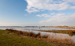 Colorful view at the Dutch National Park De Biesbosch (RuudMorijn) Tags: park travel blue autumn winter sky cloud brown lake reflection green fall reed nature water netherlands beautiful beauty dutch grass yellow clouds rural river season landscape outside outdoors countryside spring pond scenery colorful europe day peace view natural bright cloudy outdoor background horizon country herfst wide scenic peaceful sunny scene explore rush swamp wetlands headlands environment marsh typical picturesque idyllic tranquil cloudscape hollands biesbosch landschap kleurrijk noordbrabant kleuren natuurgebied kleurig nationaal hollandse wolkenlucht landtong