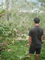 Clearing my house site (SimonEvans1) Tags: bali house bamboo greenworld batukaru tabanan