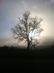 Niebla (jmd1986) Tags: espaa arbol niebla iphone riaza