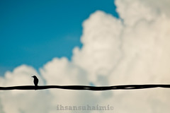 alone it is (mr_i) Tags: sky bird love nature nikon zoom bokeh harmony nikkor f28 d90