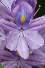 Singularity (bernardosw) Tags: blue brazil flower texture yellow closeup velvet polen es pollen indescribable dmcfz150