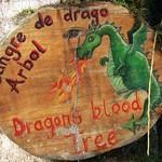 "BIO 245: Ecology of Ecuador<a href=""http://farm8.static.flickr.com/7060/6996073110_a28bc75ae3_o.jpg"" title=""High res"">∝</a>"