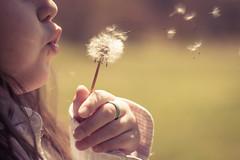 Make a wish (Kilkennycat) Tags: nature girl canon child 50mm14 dandelion wish 500d t1i twomilerunpark
