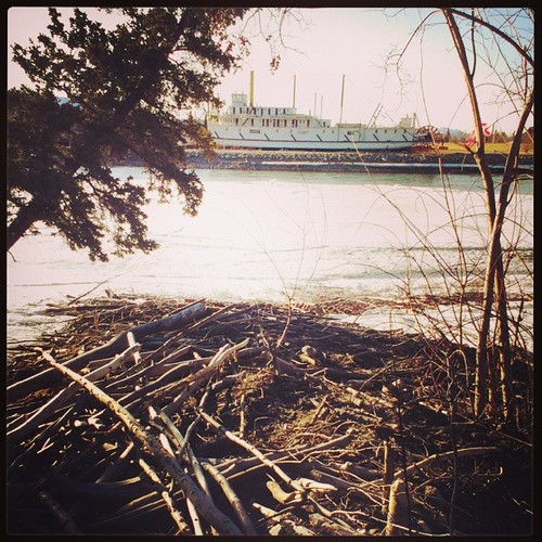Beaver lodge across the #yukon River from the SS Klondike sternwheeler #yxy