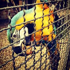 Blue yellow #Macau #Gurgapark #Essen  #Deutschland #Germany (Rashdi (RXposure)) Tags: blue macro yellow germany deutschland essen caged nut macau gurgapark