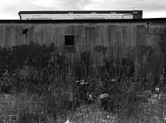 Dark Wall (geowelch) Tags: toronto field wall blackwhite etobicoke scrub urbanfragments olympusomdem5 panasoniclumixvario1445mm