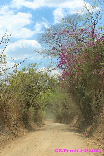 Dirt Road to Río Frio (Cold River), Atiquizaya, El Salvador