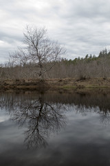 Musquodoboit River Canoeing (HalifaxTrails.ca) Tags: camping trees nova river spring paddle canoe canoes canoeing scotia paddling musquodoboit