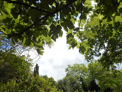 (Psinthos.Net) Tags: trees light shadow sky sunlight nature clouds countryside spring day fig branches walnut walnuts may bluesky noon sunrays treebranches brambles figtree cypresstree planetree figleaves       psinthos
