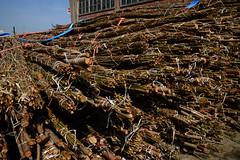 wood bundles (larry_antwerp) Tags: wood port belgium belgi terminal quay antwerp bundle  antwerpen hout abes    bundel