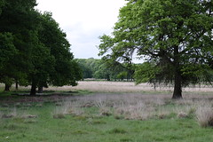 Field (ItsMeBjorn) Tags: park city urban london nature naturallight richmondpark londonpark outdoorlight nikond3300