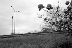XT1-05-12-15-12-2 (a.cadore) Tags: nyc newyorkcity blackandwhite bw zeiss landscape uptown fujifilm riversidepark uws carlzeiss xt1 biogont2828 zeissbiogon28mmf28 fujifilmxt1