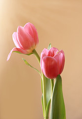 I love tulips (fucsia_7) Tags: pink two flower tulip