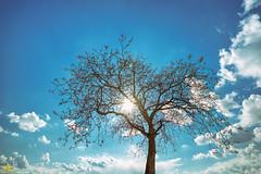 Tree, Sun, Sky, Clouds (Andy Brandl (PhotonMix.com)) Tags: sky tree nature clouds germany landscape nikon open free bluesky photonmix