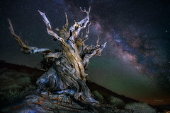 'Colour of Night' - Bristlecone Pine Forest (Gavin Hardcastle - Fototripper) Tags: tree pine night forest way stars photography nightscape astro astrophotography milky bristlecone milkyway gavinhardcastle fototripper