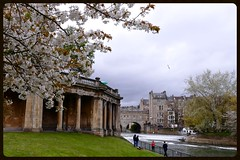 Spring in Bath (Englepip) Tags: tree architecture buildings river bath blossom tourists wiltshire riveravon pulteneybridge springweir